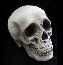 """Realistic Lifesize Human Skull Scary Haunted House Halloween Party Prop 8"""""""