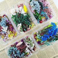 1 Box Mixed Dried Flowers DIY Epoxy Resin UV Filling Aromatherapy Decor Craft