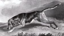 BLUTHUND Lithographie von Barraud um 1840 ORIGINAL!