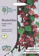 Mr Fothergills -  Flower - RHS Rhodochiton Purple Bell Vine - 15 Seeds