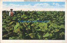CUBA TOBACCO PLANTATION ED. ROBERTS & CO