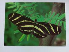 Buckfast Butterfly Farm Postcard - Zebra Butterfly c1980s