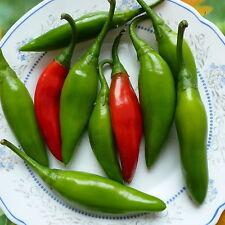 Bulgarische Paprika Ribki (scharf), Saatgut 20+ Stück Samen aus Eigenanbau