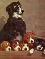 Abandoned Dog and her Pups in a Crate on Street Wesley Dennis Book plate print
