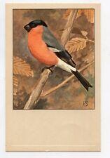 Oiseaux .BOUVREUIL ORDINAIRE   Birds .BULLFINCH .  Geflügel . pájaros  . 家禽 .