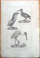 La Spatule, La Becasse, Le Savacou - 1830s French Bird Print