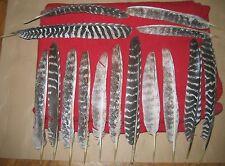 15 Vogelfedern Federn Truthahnarten 33-42cm sammeln basteln