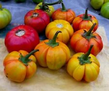 Pumpkin Eggplant 50 Seed Organic Garden Heirloom Delicious Vegetable Native