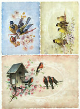 Rice Paper Birds in Nest for Decoupage Decopatch Scrapbook Craft Sheet