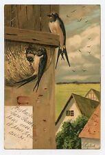 Les hirondelles . The swallows . ツバメ
