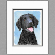 Curly-Coated Retriever Dog Original Art Print 8x10 Matted to 11x14