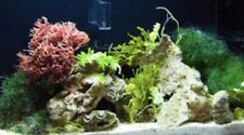 Ultimate Refugium Pack (7 Vatiety Macroalgae)