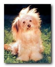 Cute Fluffy Dog Kids Room Animal Wall Decor Art Print Poster (16x20)