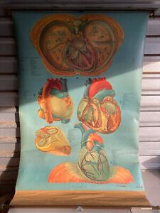 Vintage Denoyer Geppert Medical Poster Chart 72x43 Human Heart 41585 Lariviere