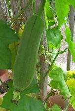 20x Luffa Seeds Loofa Loofah Seeds Rare Viable Vegetables Bonsai in Home Garden