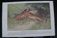 Vintage Fishing Modern (1900-79) Date of Creation Art Prints