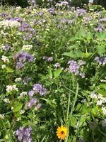 Z BIENENWEIDE 500 g Blühstreifen TOP Bienenwiese Saatgut BUNTE Bienenmischung