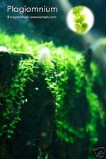 Pearl Moss-Fish Tank Live Aquarium Plant(FREE S&H) INV