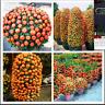 20 Pcs Bag Orange Seeds Climbing Orange Tree Seed Organic Fruit Bonsai Seeds NEW