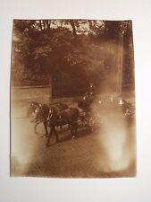 2 Pferde mit Kutsche auf einer Straße / Foto
