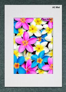A4 Multi-coloured Plumeria Madness FLOWER CANVAS ART PRINT Gift - Australia Made