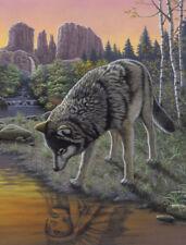 Malen nach Zahlen - Reflections - Wolf