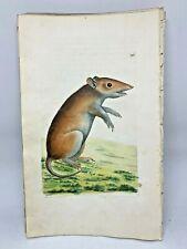 Porculine opossum - 1783 RARE SHAW & NODDER Hand Colored Copper Engraving