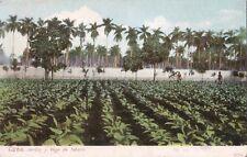Postcard Cuba Jardin y Vega de Tabaco Tobacco Field c1901-06 Unused