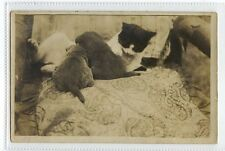 (Sc401-100)  Cats On Chair,unused ,Vg