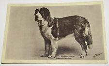 Old Postcard CHAMPION ST BERNARD DOG. CHRYSANTHEMUM.
