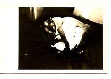 Pet Siamese Cat Feeds Kittens-Animals-Amateur RPPC-Vintage Real Photo Postcard