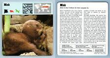 Mink - Mammals - 1970's Rencontre Safari Wildlife Card