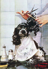 COCKER SPANIEL GETS A HAIRCUT CHARMING COMIC DOG GREETINGS NOTE CARD