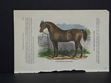 Horses, c.1890 A Good Form For Saddle Horse #48