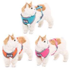 Harnais bleus en nylon pour chien