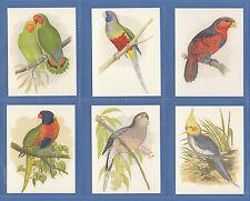 GDS  CARDS  -  SET  OF  L 25  PARROTS  CARDS  -  2007