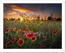 Texas Wildflowers At Sunrise Art Print Home Decor Wall Art Poster - C