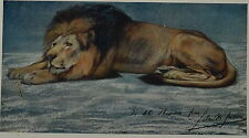 Study Of A Lion by John MacAllan Swan. Color Plate. The Studio, 1910.