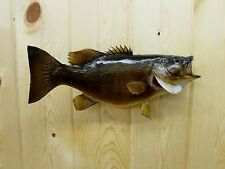 SMALL MOUTH BASS  MOUNT TAXIDERMY FISH FISHING CABIN GIFT LARGEMOUTH SB-23