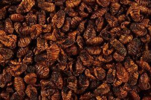 Natural Food Dried Silkworm Pupae TURTLE, REPTILE FOOD & POND KOI CARP FISH FOOD