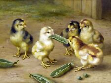 Best Gift Home Living Room Wall Decor chickens Oil Painting Printed On Canvas