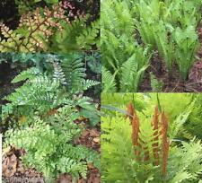 Cold Medium H3 (-5 to 1 ° C) Hardiness Plants, Seeds & Bulbs