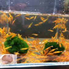 8 Orange Shrimp