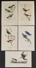 "John James Audubon 5 Hand Colored 19th Century Lithographs 10.5"" X 6.75"""