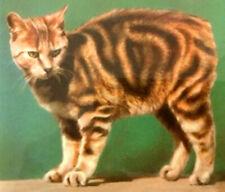 "Manx Cat Ceramic Tile w/ Vintage 1978 Colourmaster International Photo 4.25"" Euc"