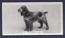 COCKER SPANIEL - Original 1930's Photographic Cigarette Card