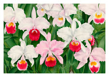 Linden Orchid 5 by Jean Linden Orchids A4 Art Print Flower Art
