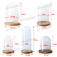 Glass Display Cloche Bell Jar Dome Wooden Base  Decoration  Display Stand DIY