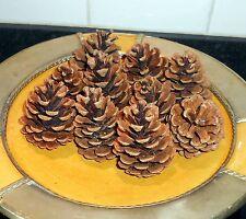50 PijnAppel 50 Pommes de Pin Naturelles Sèches pour Déco Noël Loisirs Créatifs