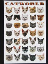 Hobbyposter Catworld (Katzenwelt ) 61 x91 cm